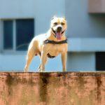 TreT el perro que es un heroe haciendo Parkour 6