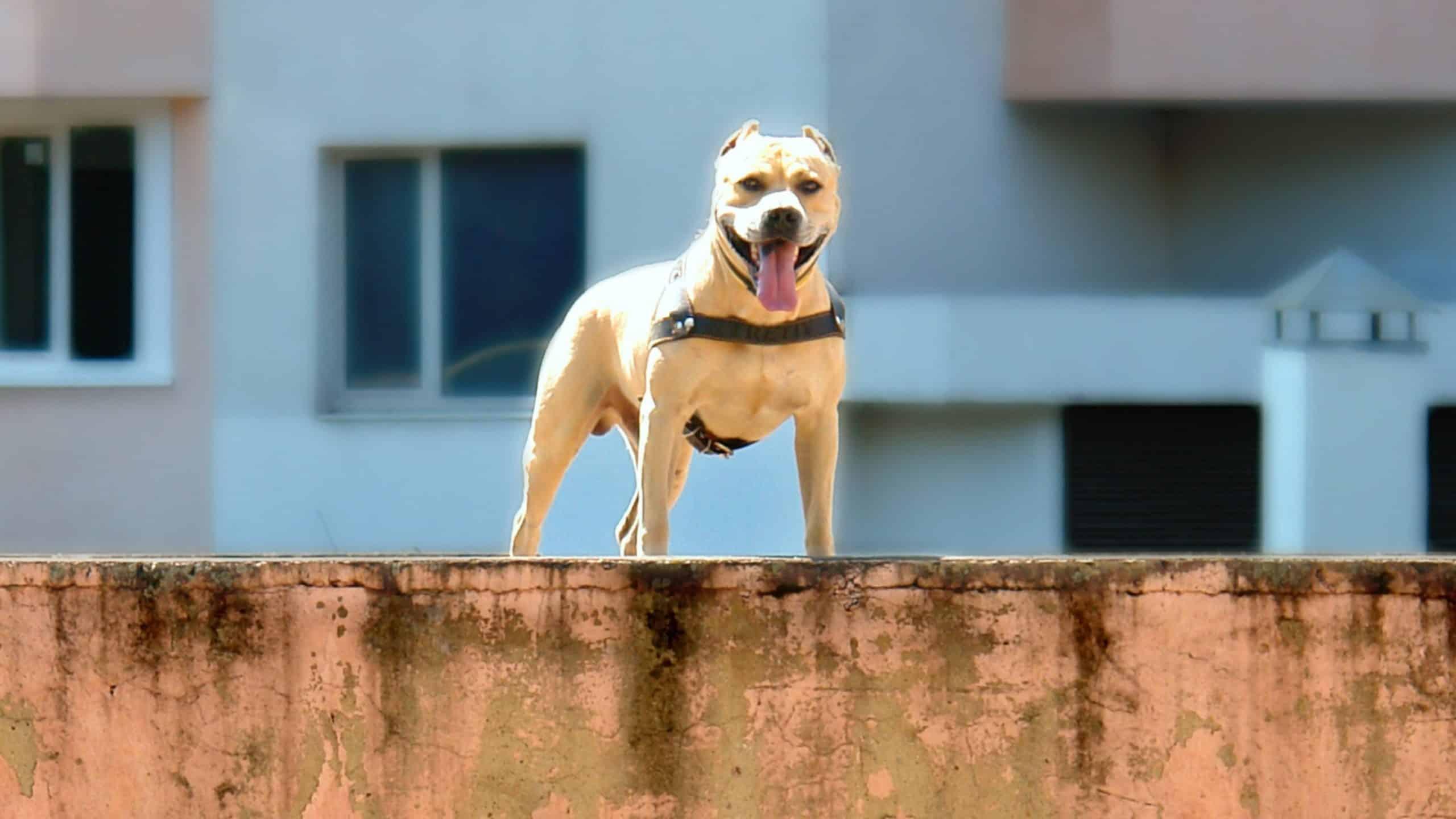 TreT el perro que es un heroe haciendo Parkour 10