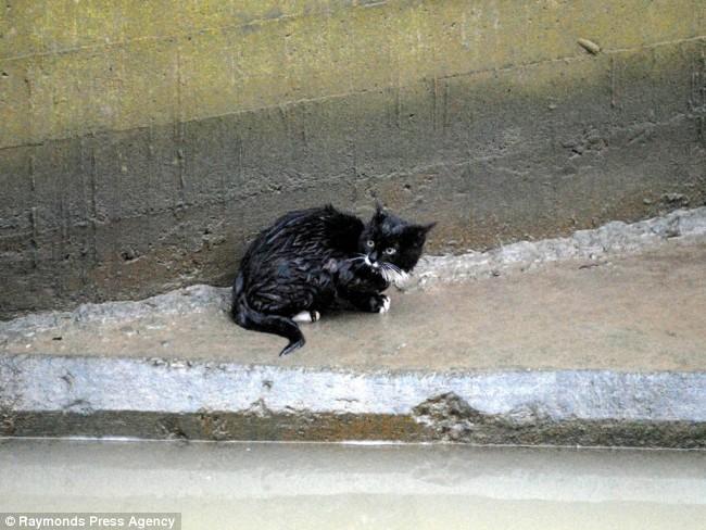 Cómo rescatar a un gato negro de un depósito de agua