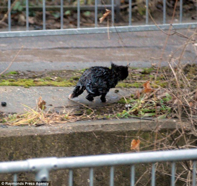gato-negro-mojado-corriendo-2111563