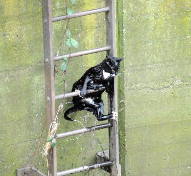 gato negro mojado salvado escaleras