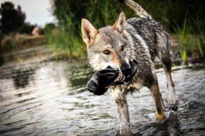 Animales Híbridos – Cruces de animales más exóticos 17