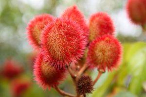 15 Frutas Exóticas que no Creerás que Existen 6