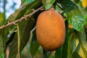 15 Frutas Exóticas que no Creerás que Existen 11