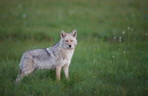 Animales Híbridos – Cruces de animales más exóticos 20