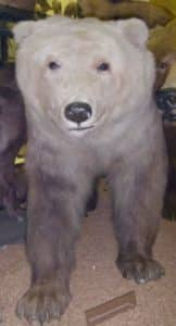 Animales Híbridos – Cruces de animales más exóticos 14