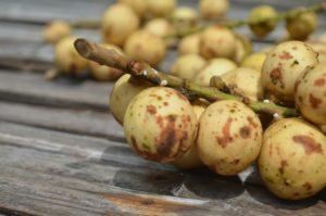15 Frutas Exóticas que no Creerás que Existen 10