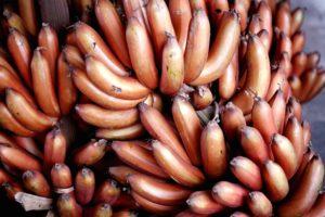 15 Frutas Exóticas que no Creerás que Existen 2