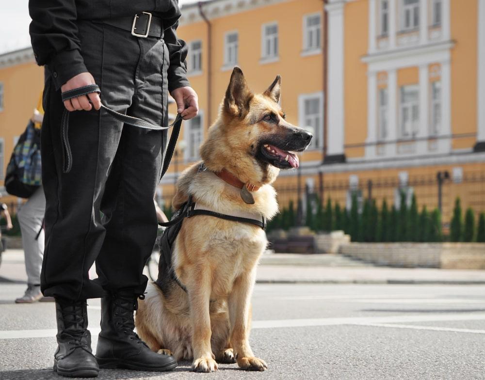 clonación perros policia
