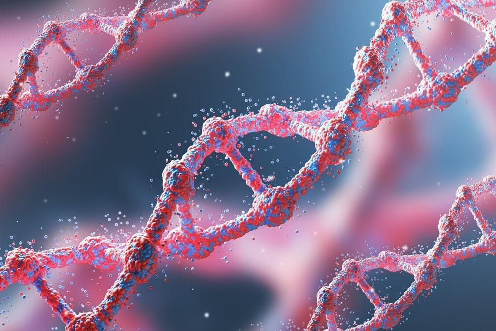 Monos con genes humanos 1 - Científicos crean Monos con Genes Humanos