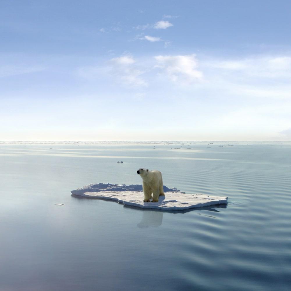 La tierra en Extinción: 2º para un calentamiento Global sin vuelta atrás 11