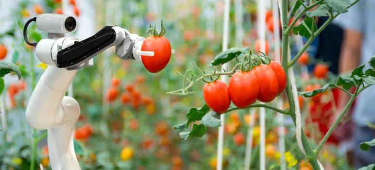 granja robotica 772x350 - Granja Robotizada de IronOx-Lo Último en Cultivación