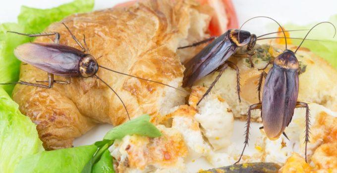 5d28063f6136b 680x350 - El Súper alimento del futuro: La leche de Cucaracha