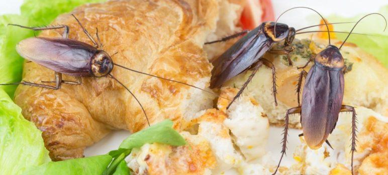 5d28063f6136b 772x350 - El Súper alimento del futuro: La leche de Cucaracha