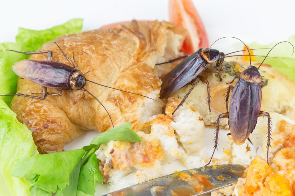 El Súper alimento del futuro: La leche de Cucaracha 10