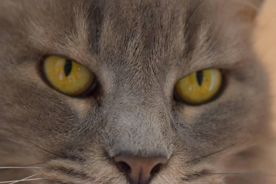 Toldo, el gato que visita a su amo en la tumba 15