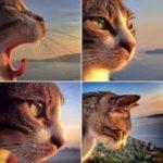 Toldo, el gato que visita a su amo en la tumba 7