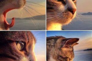 toldo 2 300x200 - Toldo, el gato que visita a su amo en la tumba