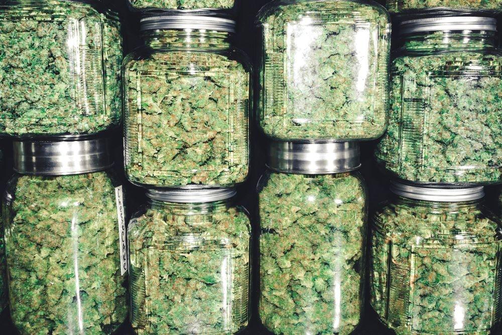"""Todo lo que tienes que saber sobre """"El Cannabis"""" 18"""