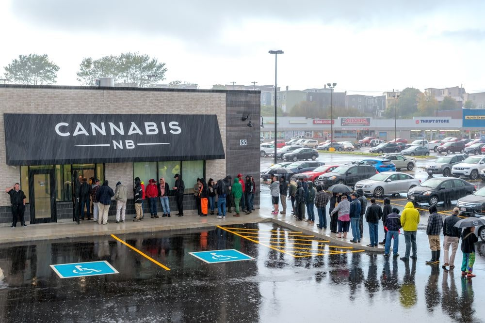 """Todo lo que tienes que saber sobre """"El Cannabis"""" 13"""