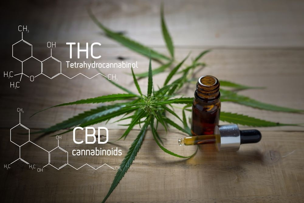 """Todo lo que tienes que saber sobre """"El Cannabis"""" 16"""
