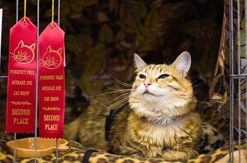 8 destinos perfectos para cualquier amante de los gatos 3