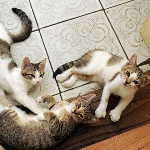 8 destinos perfectos para cualquier amante de los gatos 5