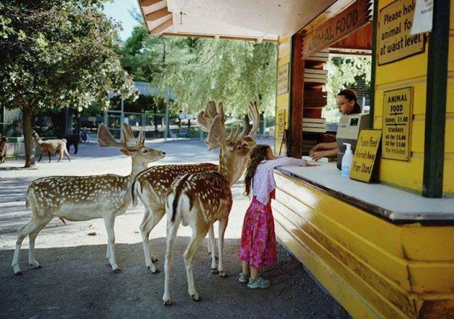 La fotógrafa Robin Schwartz muestra la conexión de su hija con animales de todo tipo 20