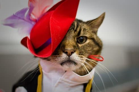 8 destinos perfectos para cualquier amante de los gatos 4
