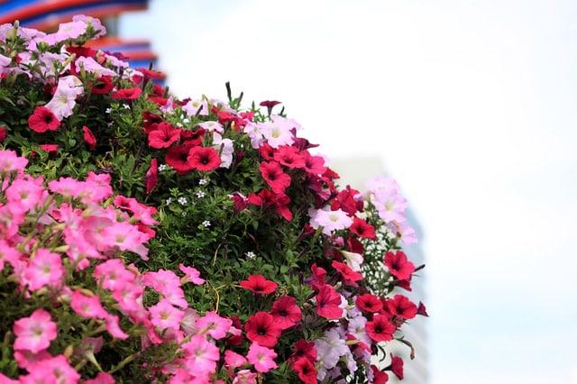 cbd de flores