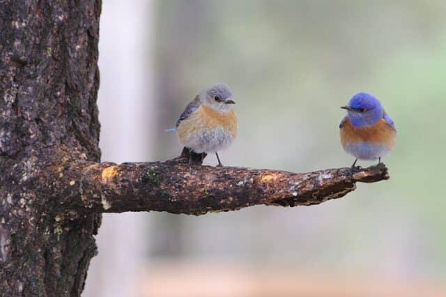 Datos interesantes sobre las aves.