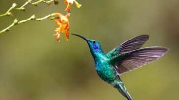 26 noticias curiosas sobre las aves